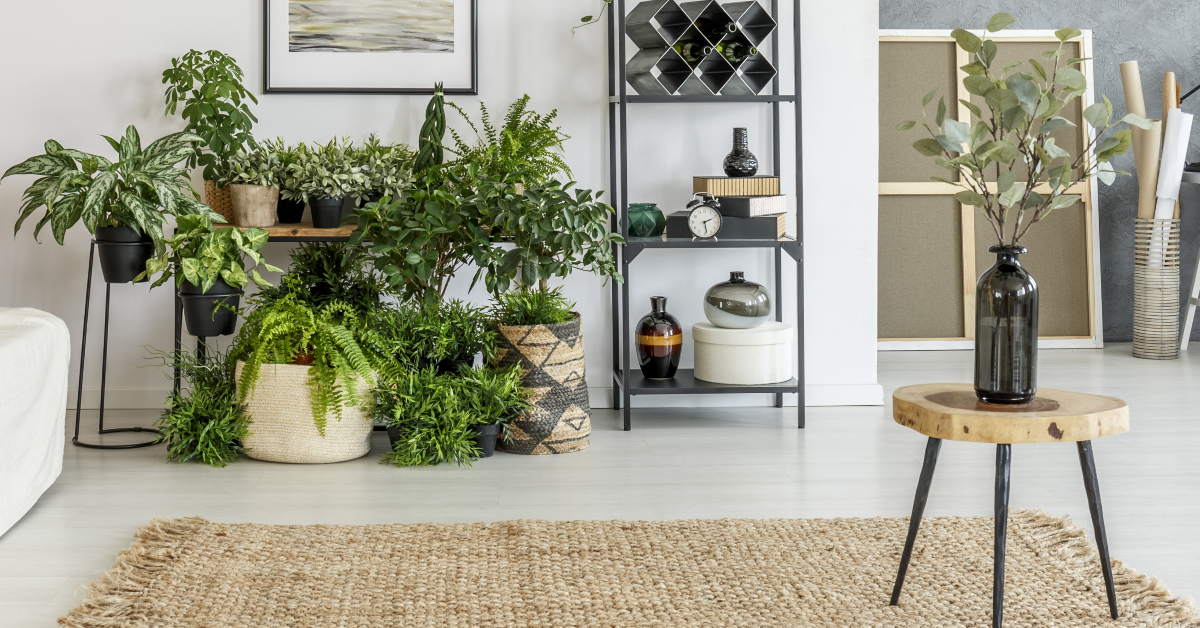 """alt=""""house plants can help combat unwanted condensation development in your home"""""""