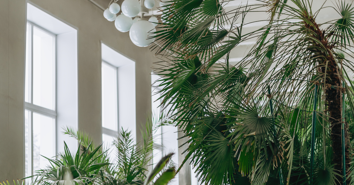 """alt=""""Biophilia merges nature with modern homes"""""""